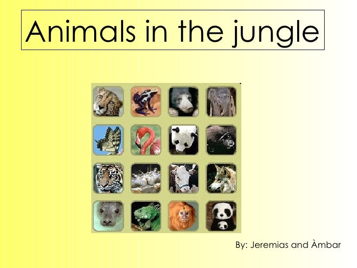 Animals in the jungle By: Jeremias and Àmbar