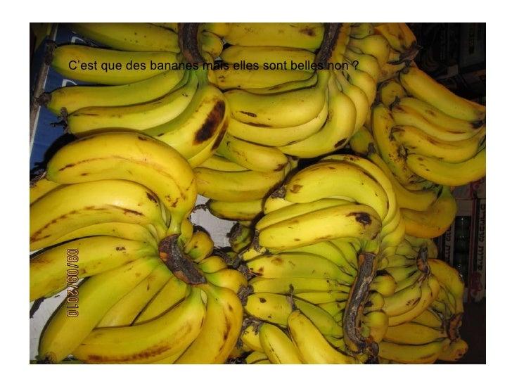 C'est que des bananes mais elles sont belles non ?