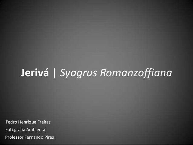 Jerivá | Syagrus Romanzoffiana Pedro Henrique Freitas Fotografia Ambiental Professor Fernando Pires