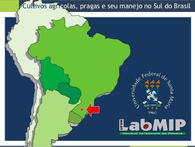 Cultivos agrícolas, pragas e seu manejo no Sul do Brasil Slide 2