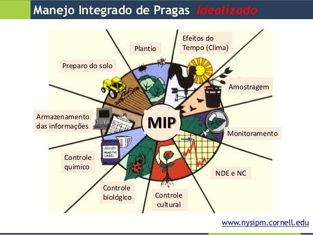 Cultivos agrícolas, pragas e seu manejo no Sul do Brasil Slide 3