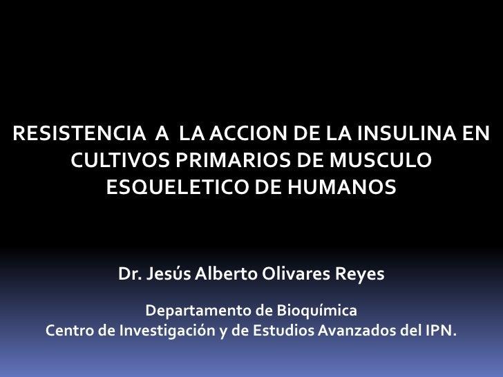 RESISTENCIA  A  LA ACCION DE LA INSULINA EN CULTIVOS PRIMARIOS DE MUSCULO ESQUELETICO DE HUMANOS <br />Dr. Jesús Alberto O...