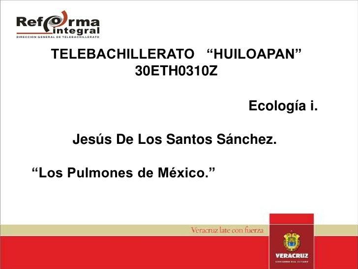 """TELEBACHILLERATO   """"HUILOAPAN""""30ETH0310Z<br />Ecología i.<br />Jesús De Los Santos Sánchez.<br />""""Los Pulmones de México.""""..."""