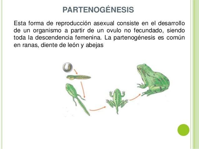 Imagenes de reproduccion asexual partenogenesis