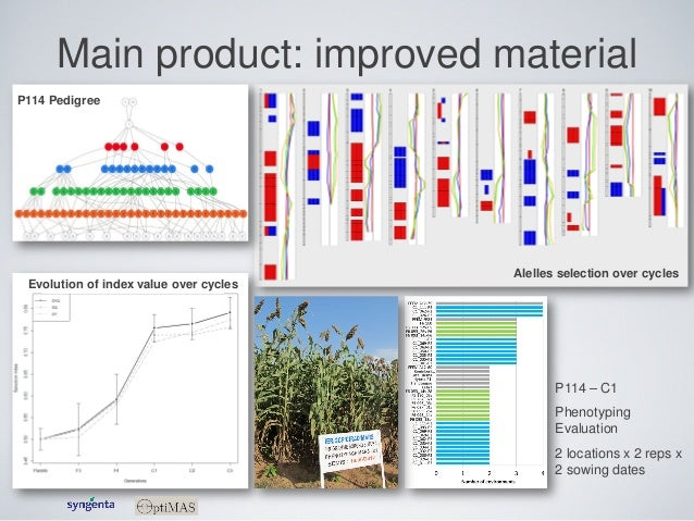 Main product: improved material P114 Pedigree Alelles selection over cycles Evolution of index value over cycles P114 – C1...
