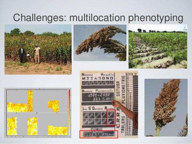 Challenges: multilocation phenotyping