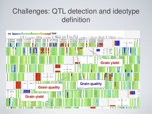Grain yield Grain quality Grain quality Grain yield Challenges: QTL detection and ideotype definition