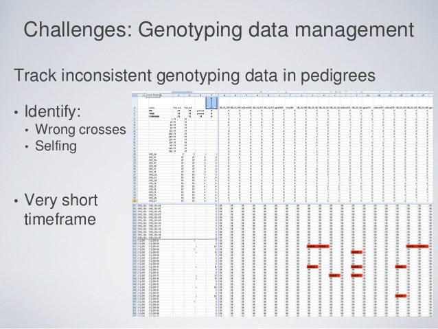Challenges: Genotyping data management Track inconsistent genotyping data in pedigrees • Identify: • Wrong crosses • Selfi...