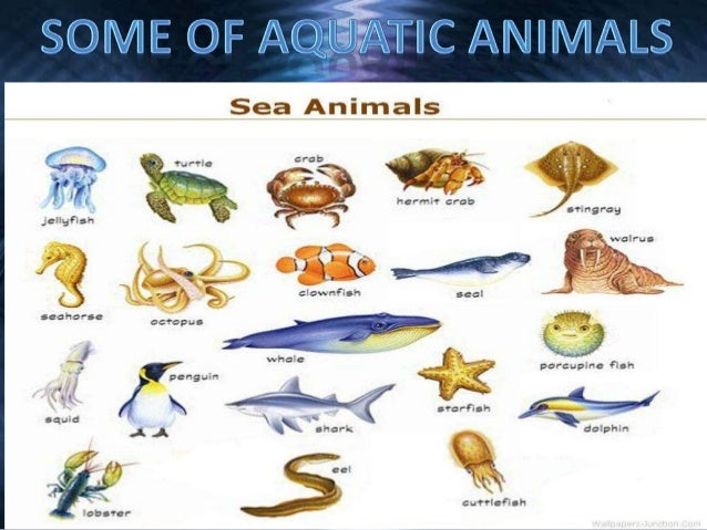 Aquatic Animals and Plants: An Introduction | Kivu