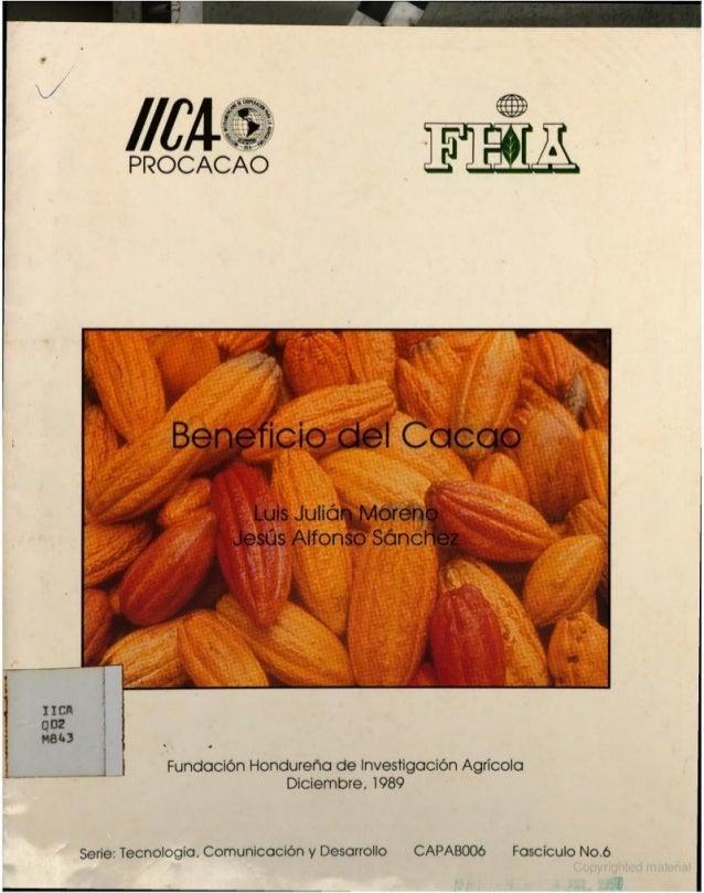 fermentación de cacao