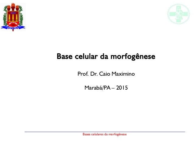 Bases celulares da morfogênese Base celular da morfogênese Prof. Dr. Caio Maximino Marabá/PA – 2015