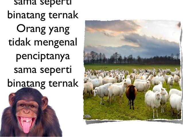 sama sepertibinatang ternak   Orang yangtidak mengenal  penciptanya  sama sepertibinatang ternak