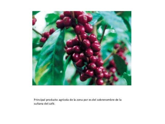 Principal producto agrícola de la zona por es del sobrenombre de la sultana del café.