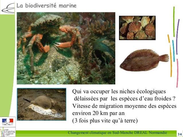 34Changement climatique en Sud-Manche DREAL Normandie Qui va occuper les niches écologiques délaissées par les espèces d'e...