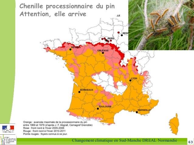 63Changement climatique en Sud-Manche DREAL Normandie Chenille processionnaire du pin Attention, elle arrive