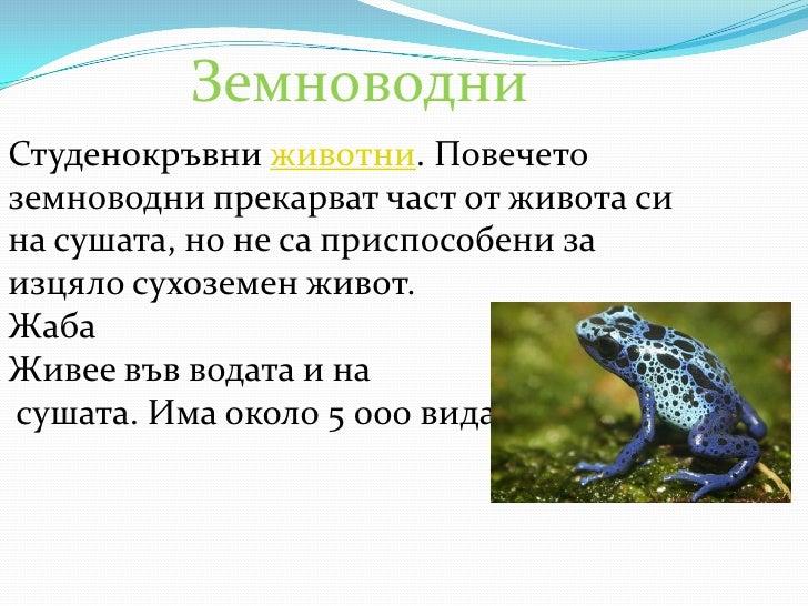 Земноводни<br />Студенокръвни животни. Повечето земноводни прекарват част от живота си на сушата, но не са приспособени за...