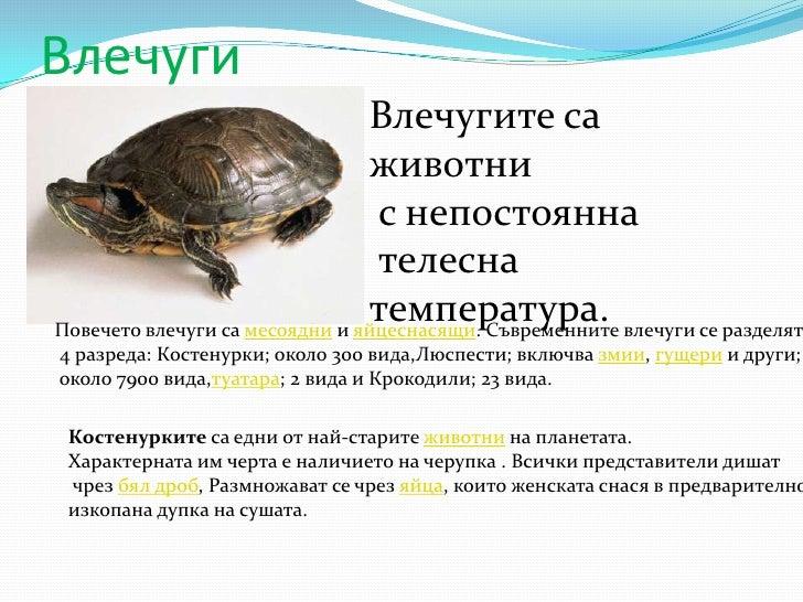 Влечуги<br />Влечугите са животни<br /> с непостоянна<br /> телесна температура.<br />Повечето влечуги са месоядни и яйцес...
