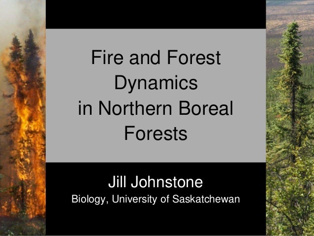Fire and Forest Dynamics in Northern Boreal Forests Jill Johnstone Biology, University of Saskatchewan