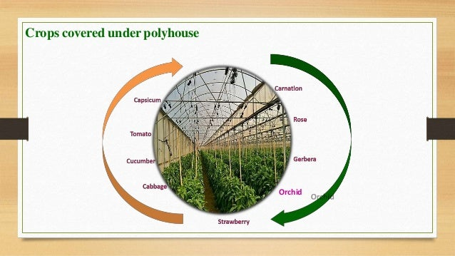 Types Of Polyhouse