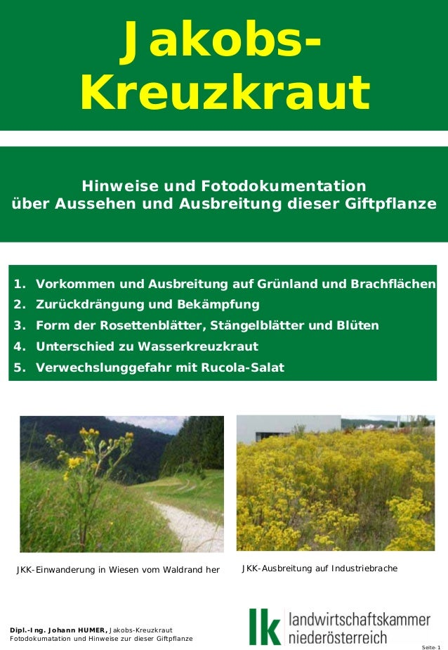 Jakobs- Kreuzkraut Hinweise und Fotodokumentation über Aussehen und Ausbreitung dieser Giftpflanze 1. Vorkommen und Ausbre...