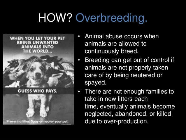 animal cruelty oral presentation In the event the license tag is lost, a duplicate may be obtained from hcph vph upon presentation of proof that the animal is currently vaccinated-hc or currently vaccinated-st and the payment of two ($200.