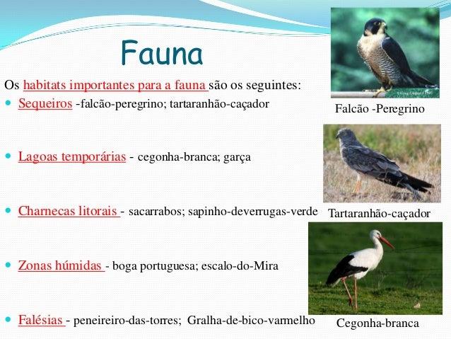 FaunaOs habitats importantes para a fauna são os seguintes: Sequeiros -falcão-peregrino; tartaranhão-caçador Lagoas temp...