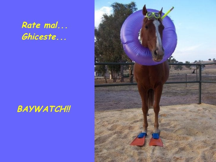 Rate mal... Ghiceste... BAYWATCH!!