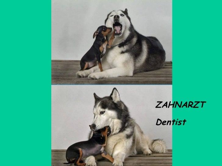 ZAHNARZT Dentist