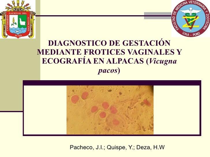 DIAGNOSTICO DE GESTACIÓN MEDIANTE FROTICES VAGINALES Y ECOGRAFÍA EN ALPACAS ( Vicugna pacos ) Pacheco, J.I.; Quispe, Y.; D...