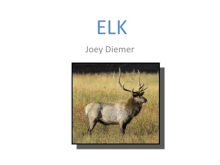 ELK<br />Joey Diemer<br />