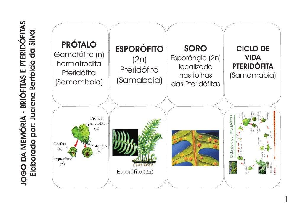 JOGO DA MEMÓRIA - BRIÓFITAS E PTERIDÓFITAS   Elaborado por: Juciene Bertoldo da Silva                                     ...