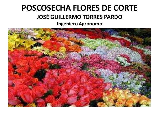 POSCOSECHA FLORES DE CORTE JOSÉ GUILLERMO TORRES PARDO Ingeniero Agrónomo