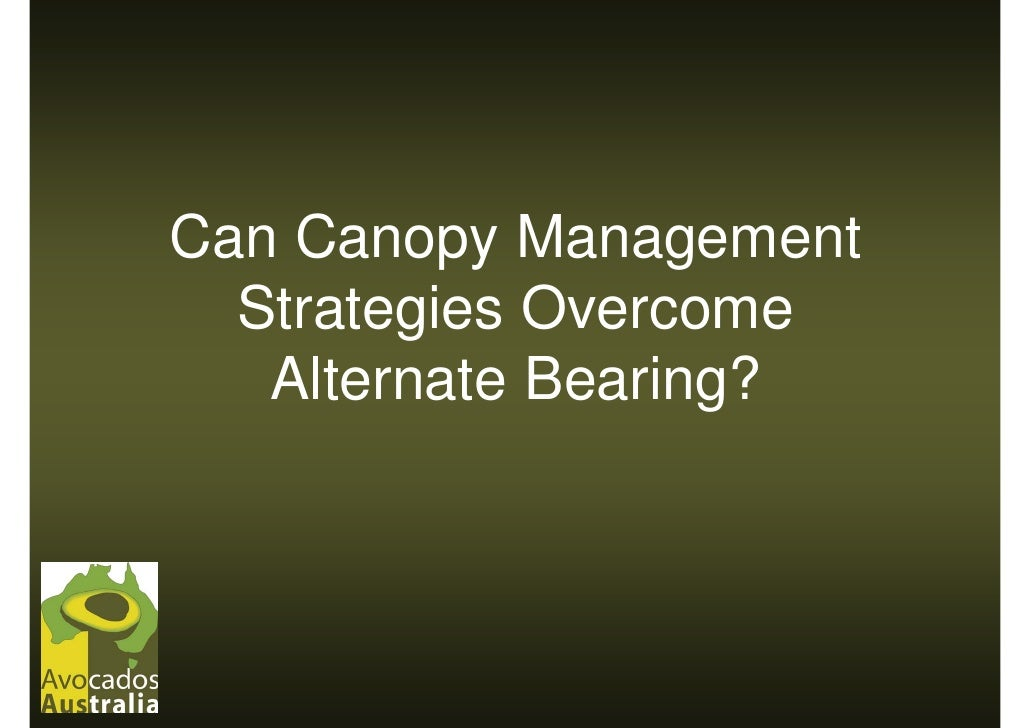 Can Canopy Management   Strategies Overcome    Alternate Bearing?