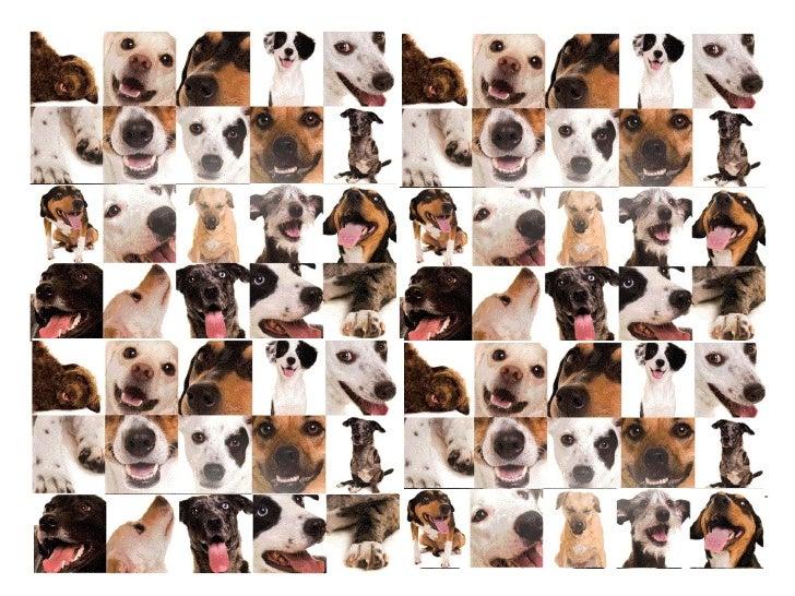 Quem sou• Sou uma pessoa que ama animais e luta pela  vida em harmonia entre humanos e animais.• Sou formada em Comunicaçã...