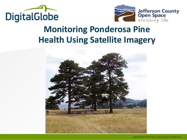 Monitoring Ponderosa Pine Health Using Satellite Imagery  DigitalGlobe Proprietary and Business Confidential