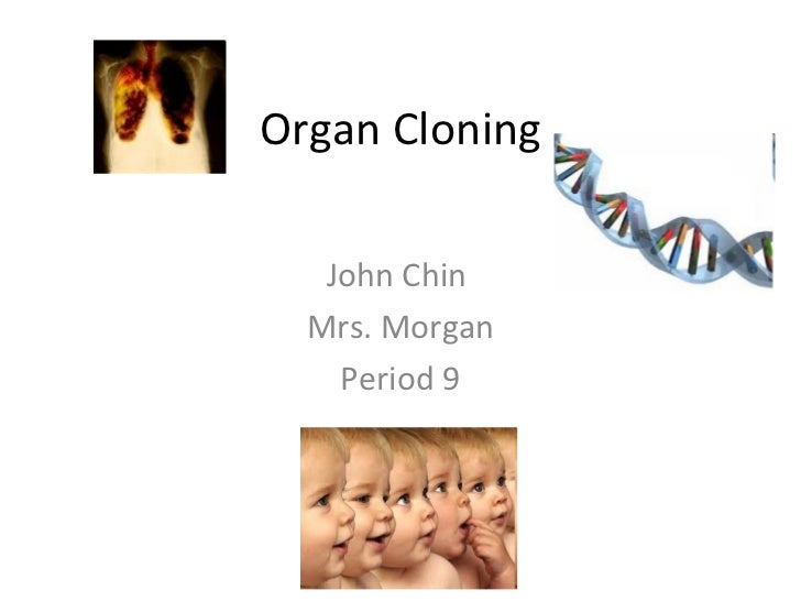 Organ Cloning John Chin  Mrs. Morgan Period 9