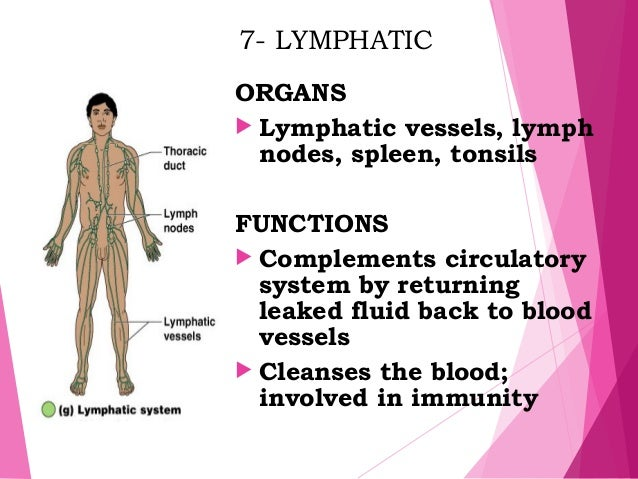 josephs story anatomy and physiology Anatomy is the science that studies the structure of the body learn about the organs and body parts.
