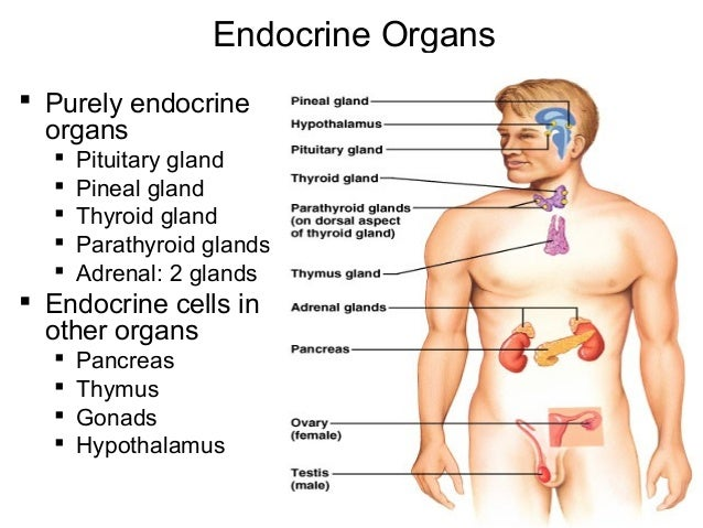 Johny\'s A&P endocrine system