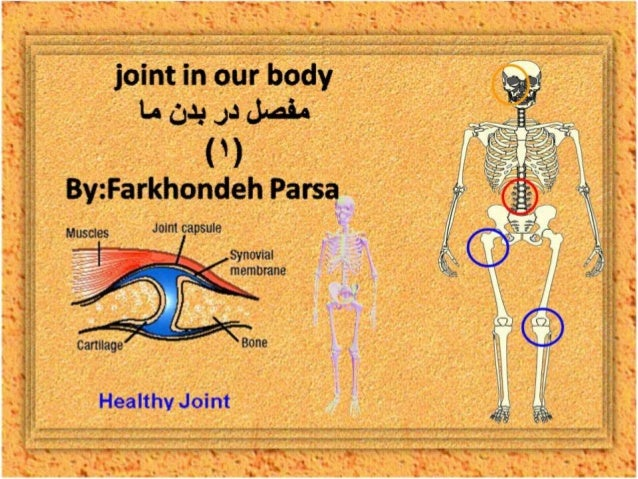 Joint in our body -1