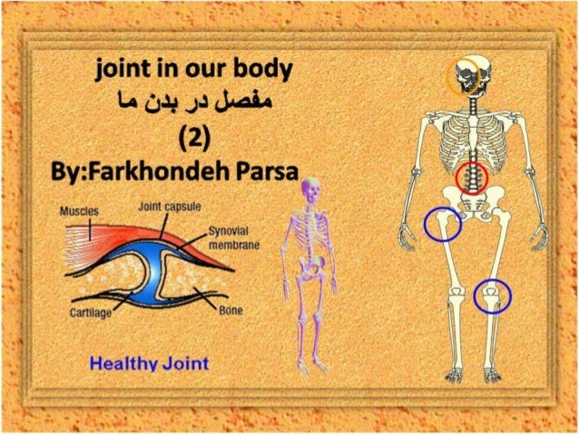 Joint in our body 2