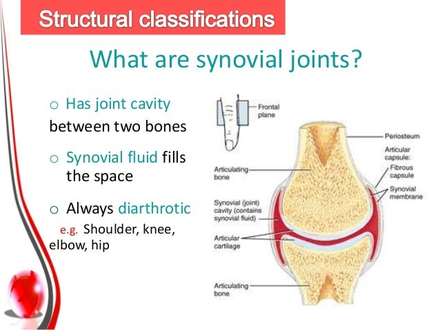joints, Human Body