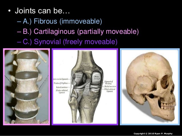human joints, skeletal system lesson powerpoint, common injuries and …, Skeleton