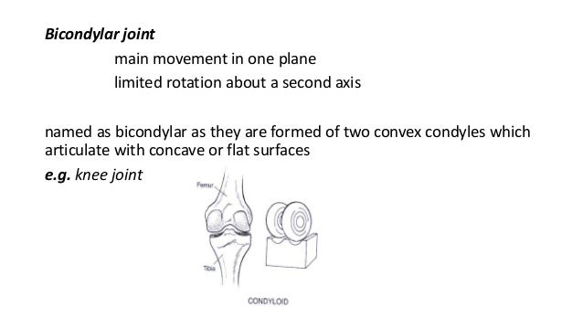 what are the primary movements of the knee joint