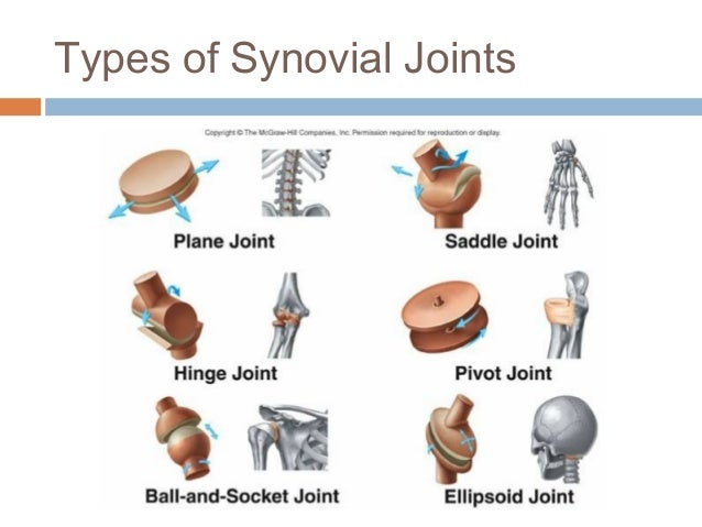 anatomy joints A need for strength makes the bones rigid, but if the skeleton consisted of only one solid bone, movement would be impossible nature has solved this problem by dividing the skeleton into many bones and creating joints where the bones intersect.