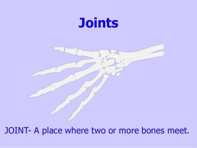 Joints JOINT- A place where two or more bones meet.