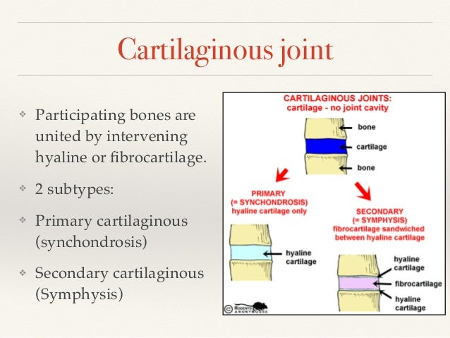 Classification Of Joints Joint Mechanics The majority of these are. classification of joints joint mechanics