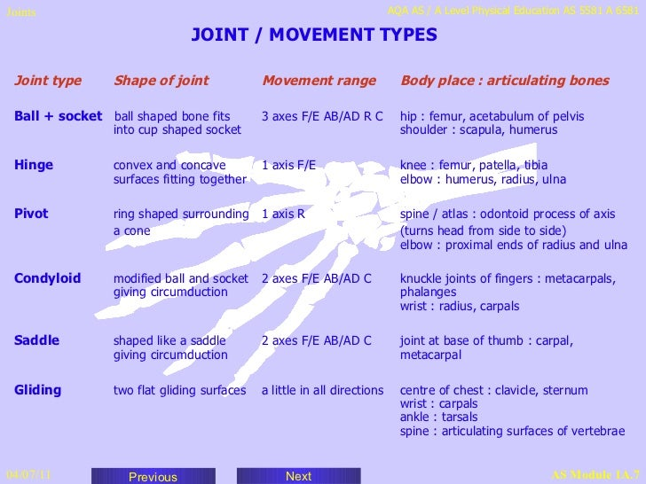 Joints – Types of Joints Worksheet