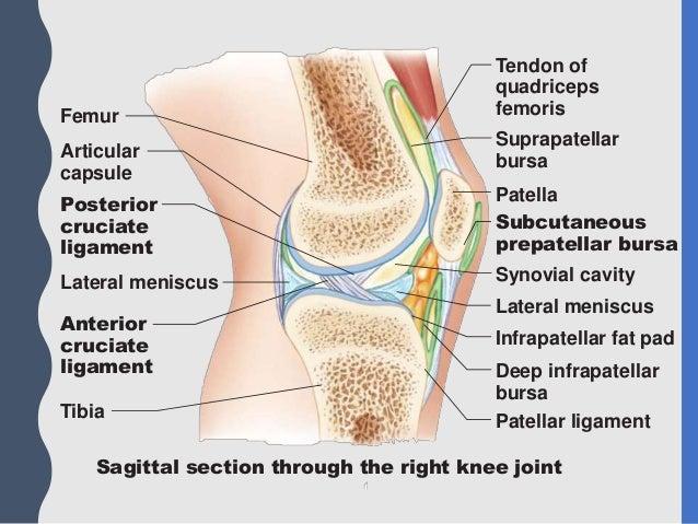Joints II