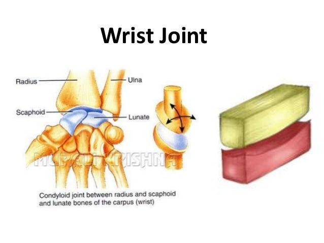 joints in yoga 1 4 rh slideshare net Immovable Joint Diagram Synovial Joint Cavity Diagram
