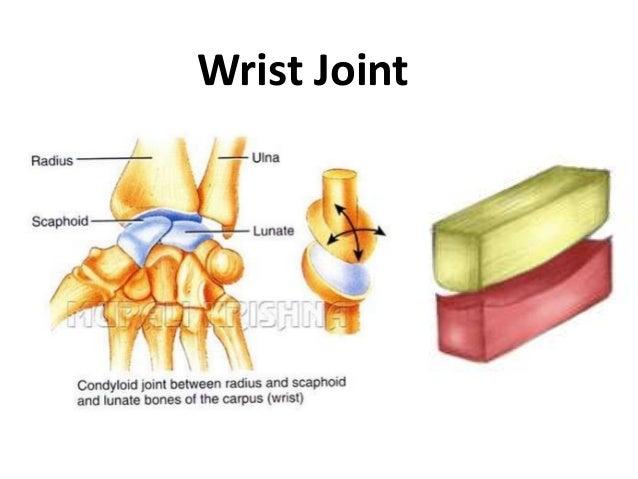 joints in yoga (1) 4, Cephalic Vein